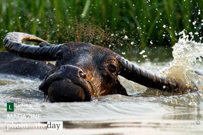 Dancing in the Water, by Saniar Rahman Rahul