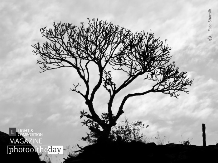 Silhouette in the Lonely World, by Easa Shamih