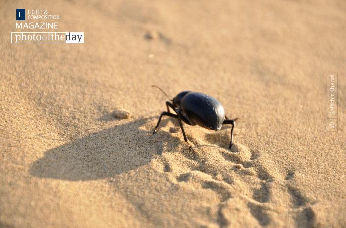 Wandering Beetle, by Shikchit Khanal