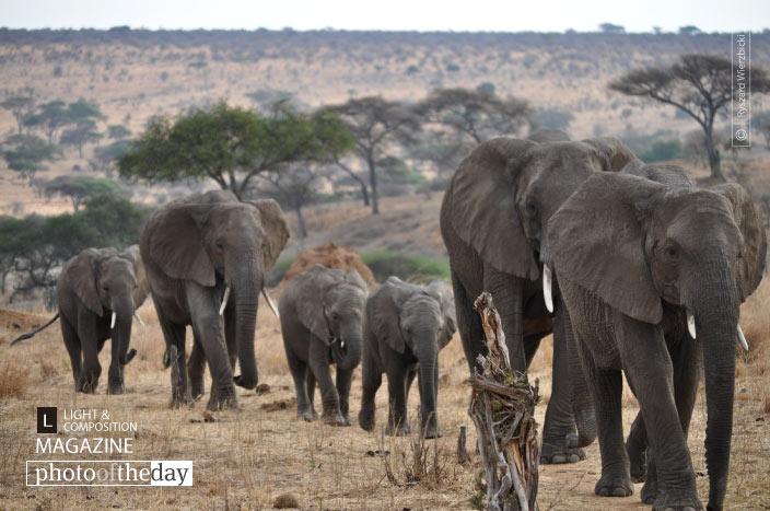 Elephant's Walk, by Ryszard Wierzbicki