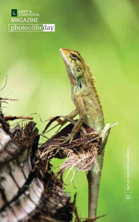 Identifying Lizard, by Rahat Azim Chowdhury