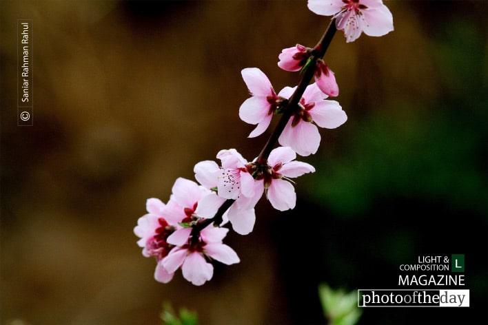 Beautifier or Nature, by Saniar Rahman Rahul