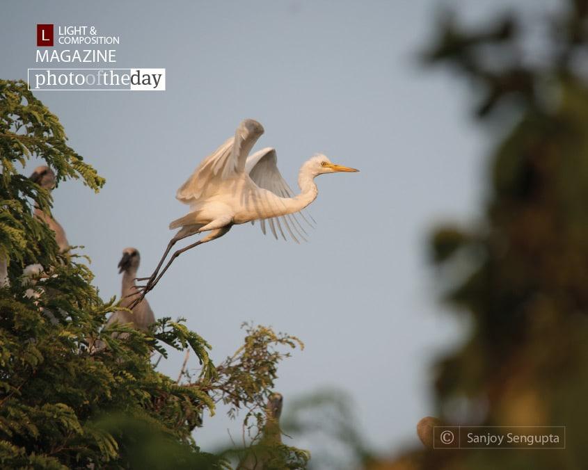 The Giant Leap, by Sanjoy Sengupta