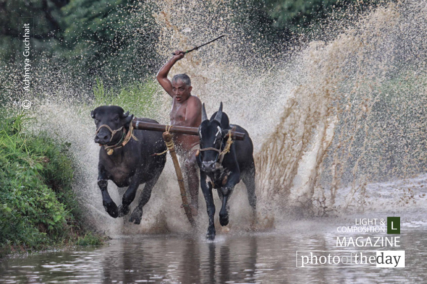 Kambala at Pallakad, by Achintya Guchhait