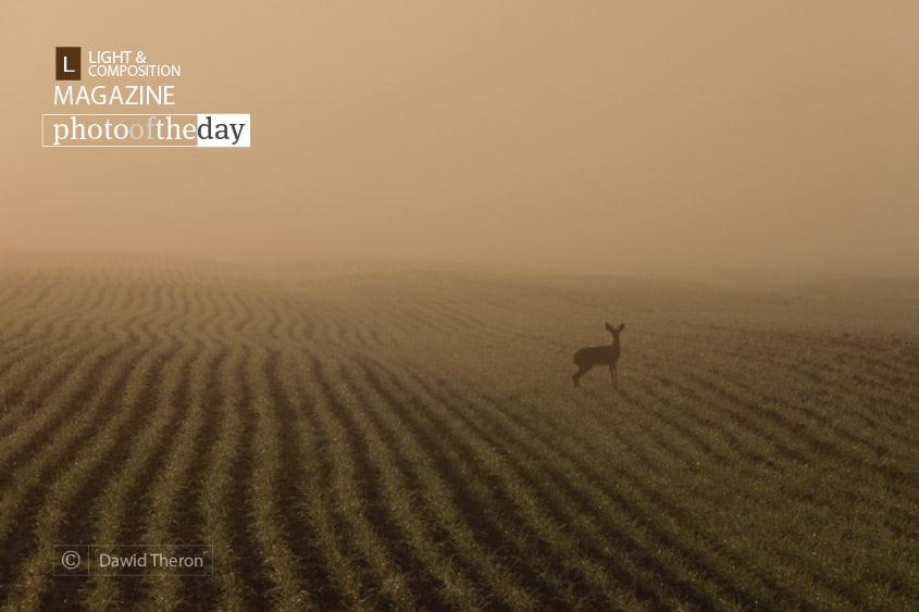 Lost, by Dawid Theron