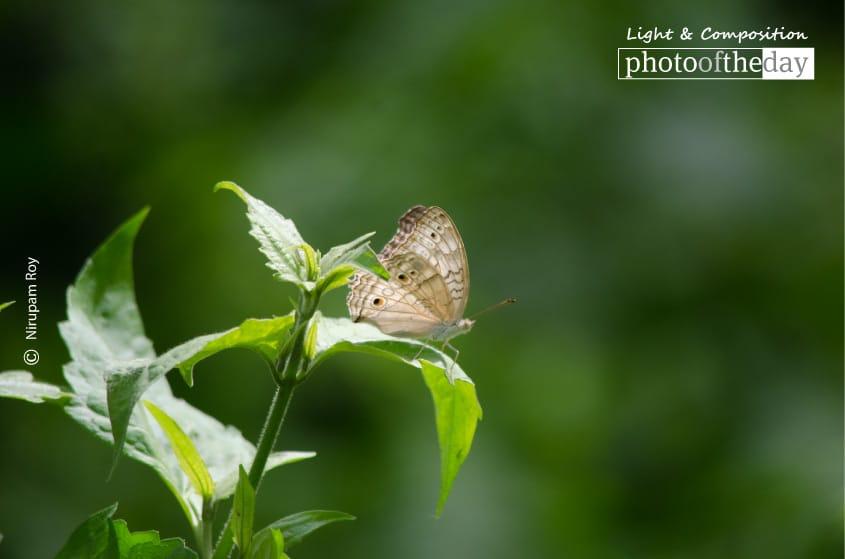 Enjoying Soft Light, by Nirupam Royy