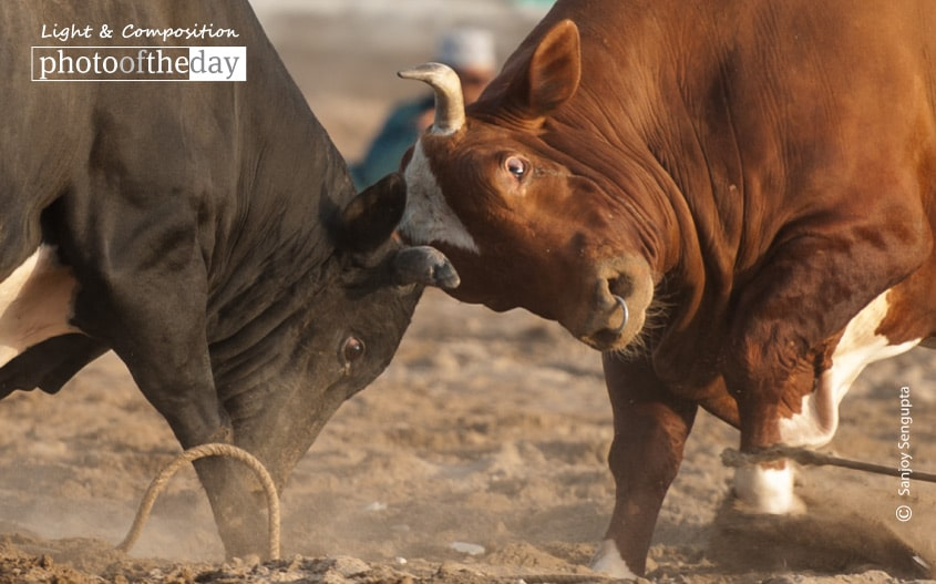 Bullfight, by Sanjoy Sengupta