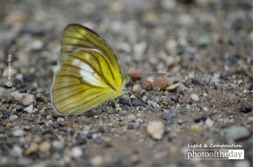 Landing, by Nirupam Roy