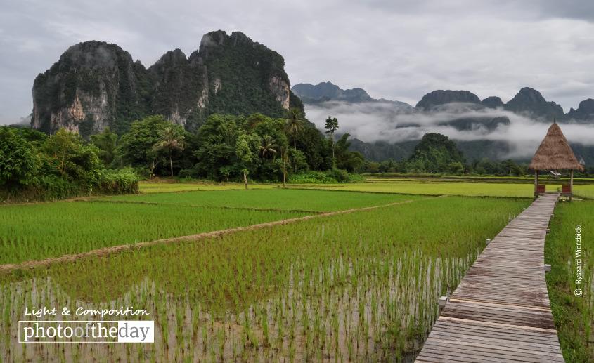 A Path across the Rice Field, by Ryszard Wierzbicki