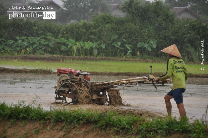 Preparing Rice Paddy Field, by Ryszard Wierzbicki