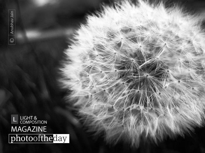 Make a Wish! by Anubhav Jain