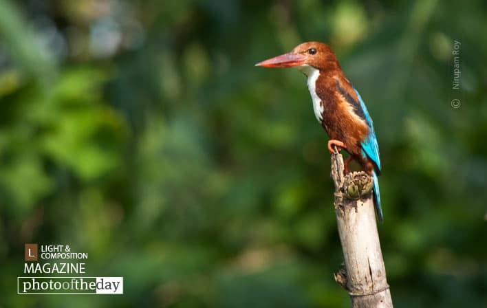 Gorgeous Parch, by Nirupam Roy