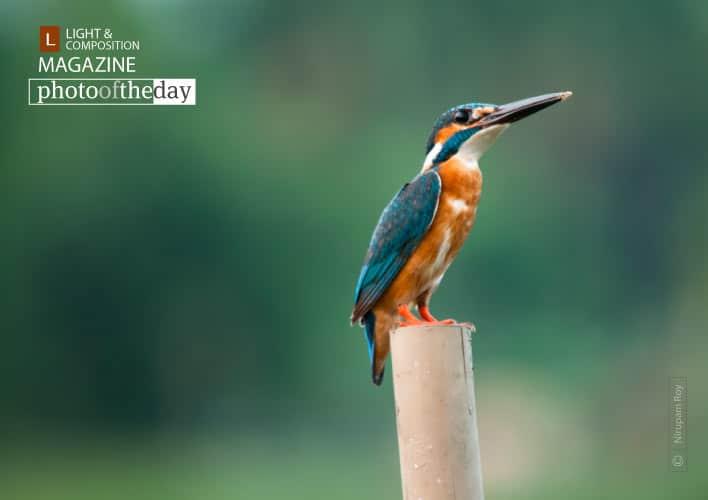 The Mystic Look, by Nirupam Roy