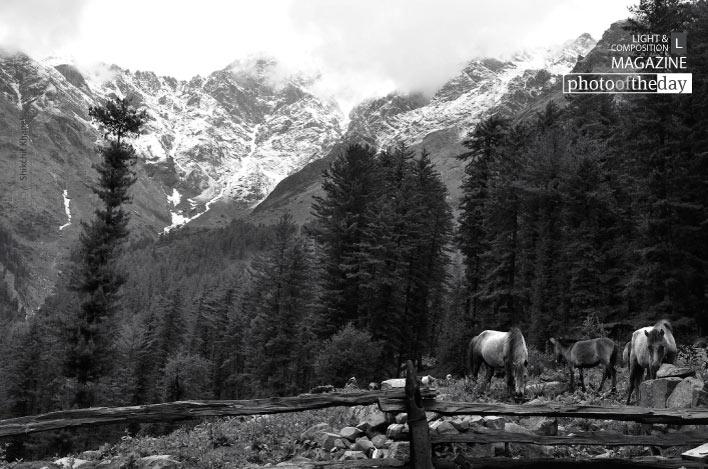 Horses of Kutla, by Shikchit Khanal