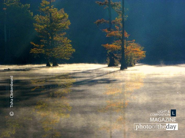 Thick Mist, by Tisha Clinkenbeard