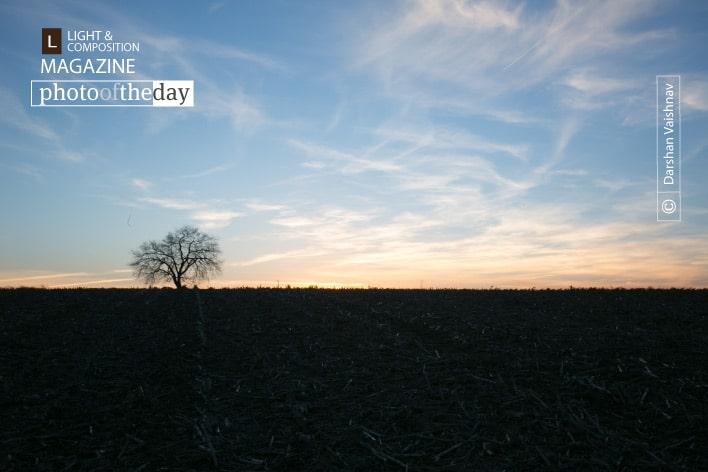 Tree, Field, and a Sunset, by Darshan Vaishnav