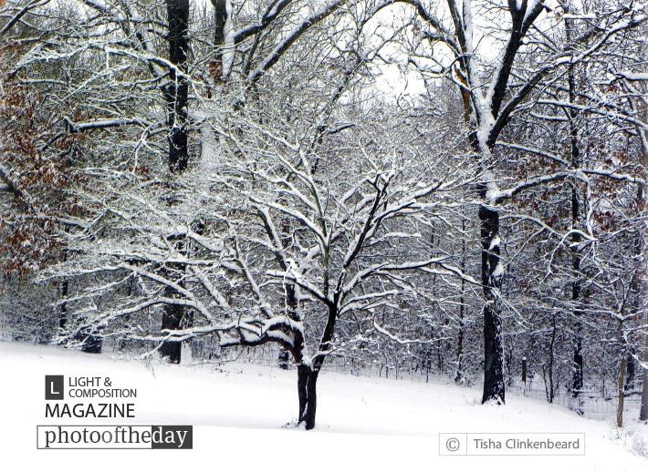 Glenna's Dogwood In The Snow, by Tisha Clinkenbeard