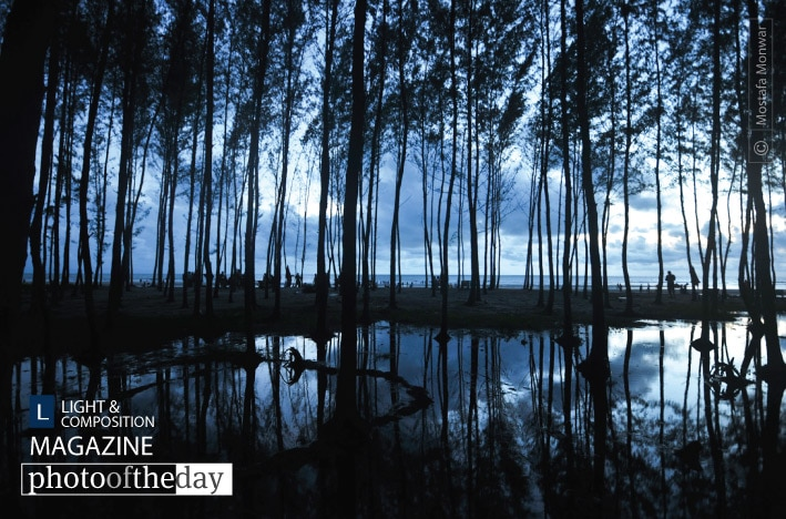 Silent Trees in a Watery Unset, by Mostafa Monwar