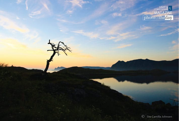 The Lone Tree, by Siw Camilla Johnsen