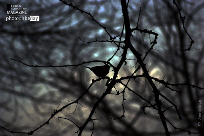 Hope, by Alminar Sagar