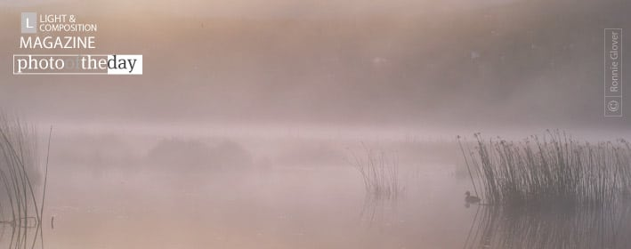 Misty Morning Duck, by Ronnie Glover