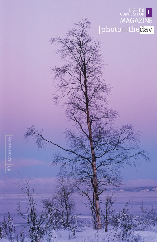 Lone Tree at Winter Sunset, by Ronnie Glover