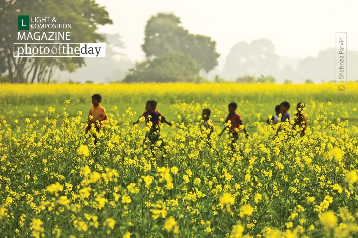 From the Yellow Field, by Shahnaz Parvin