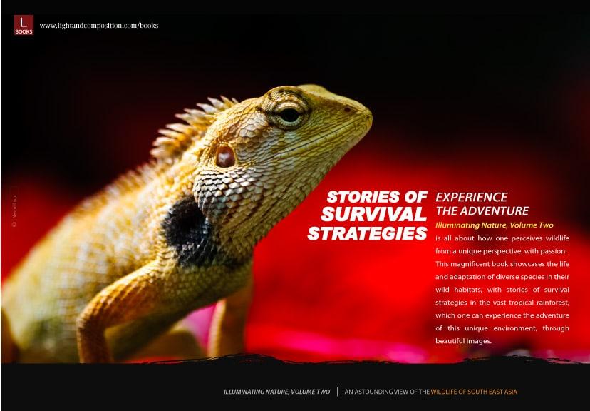 storiesofsurvivalstrategies