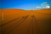 Camel Since 1913, by Ali Berrada