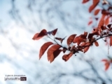 Spring in Offenbach, by Minh Nghia Le