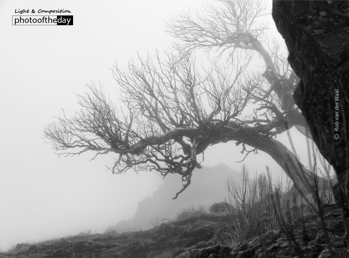 Foggy Tree, by Rob van der Waal
