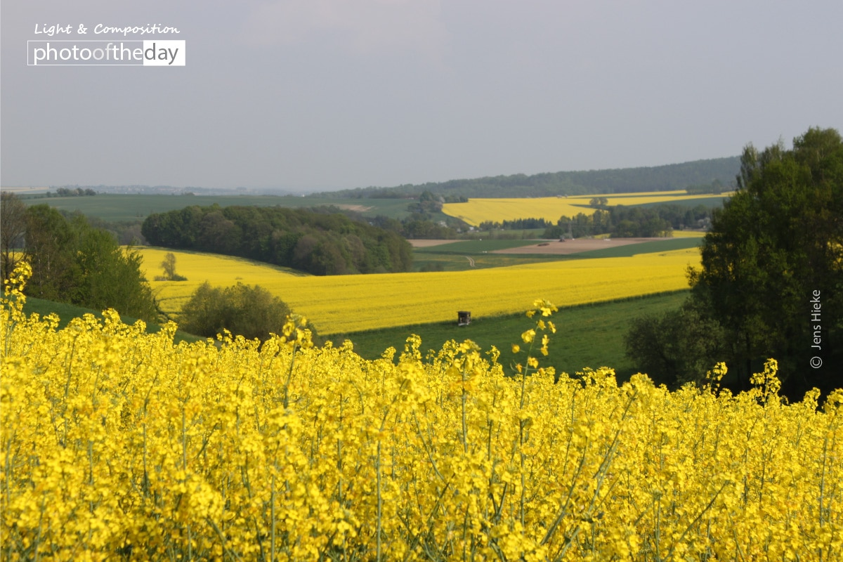 World in Yellow and Green, by Jens Hieke