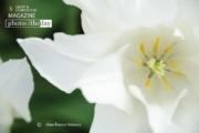 White Elegance, by Gino Franco Velasco
