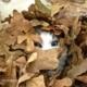 Peek-a-who? by Tisha Clinkenbeard