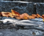 When Leaves Fall Down, by Zahraa Al Hassani