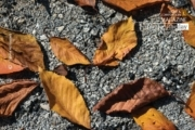 Strewn Fall Foliage, by Zahraa Al Hassani