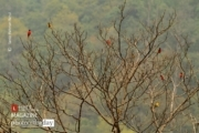Birds and Trees, by Saniar Rahman Rahul