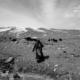 The Yak Herder, by Shirren Lim