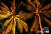 Palms at Night, by Ryszard Wierzbicki