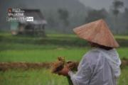 Ploughing Rice, by Ryszard Wierzbicki