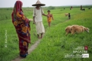 Life in the Green, by Shahnaz Parvin