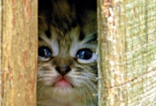 Is It Safe To Come Out?, by Tisha Clinkenbeard