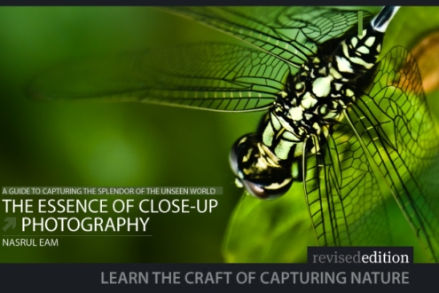 The Essence of Close-Up Photography