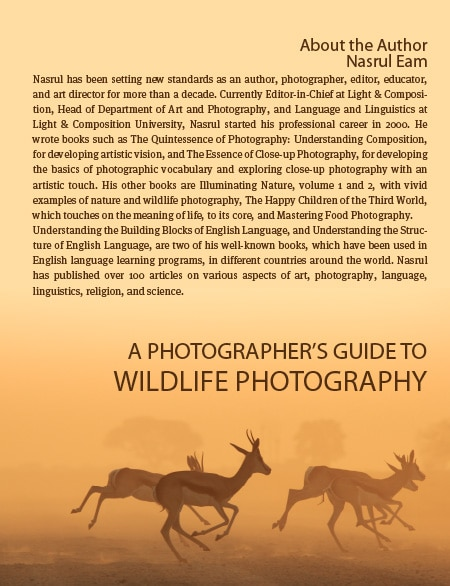 A Photographer's Guide to Wildlife Photography