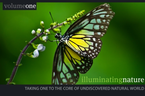 Illuminating Nature, Volume One