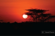 Kruger National Park Sunset, by Dawid Theron