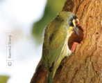 Busy with New Home, by Nazmul Shanji