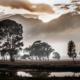 Gouda Landscape, by Dawid Theron