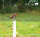 Irish Redbreast Robin, by Oscar Garcia