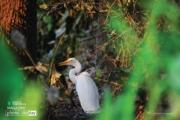 Hide and Seek, by Sanjoy Sengupta